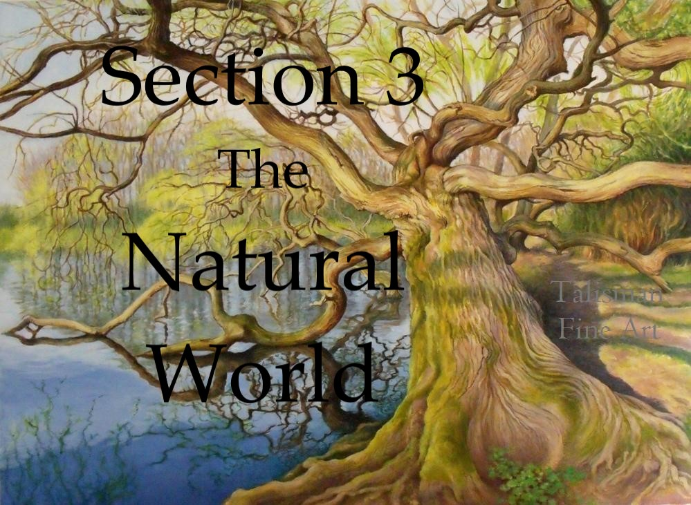 Section 3, The Natural World - Talisman Fine Art